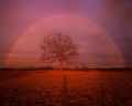 rainbow, tree, sunset, evening, Hadley, Patrick Zephyr, Massachusetts, nature Photography, landscape photography, red, shadow
