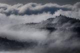Quabbin Fog print