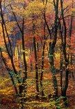 Autumn Candy print