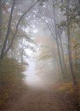 Autumn Fog print