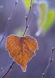 Changing Seasons print