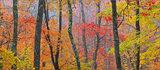 Crayola Forest print