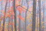 Fire in the Fog print