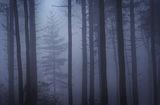 Forest Window print