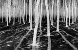 Inverse Forest print