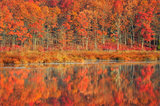 Late Autumn Light print