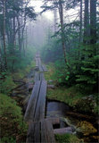 The Long Trail print