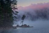 Pink Fog print