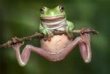 White's tree frog print