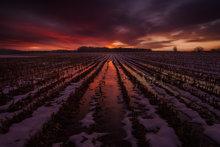 sunset, Hadley, Massachusetts, cornfield, dusk, reflection,