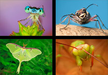 Amazing Insects (4 images)
