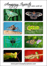 Amazing Insects Set