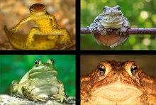 Amphibians (4 images)
