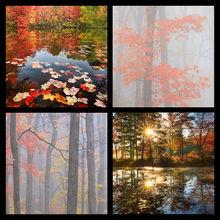 Autumn Foliage 2 Coaster Set