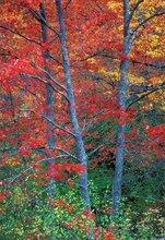 autumn, foliage, Massachusetts, fall, New England
