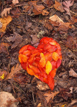 Heart, leaves, red, autumn,