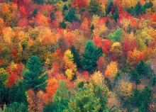 Vermont, autumn, trees, foliage