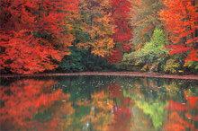 Amherst, autumn, reflection, pond, Massachusetts
