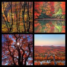 Autumn Foliage 1 Coaster Set