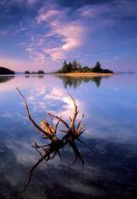Quabbin reservoir, sunrise, Massachusetts, driftwood