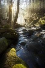 fog, stream, sunrise, forest, massachusetts, patrickzephyr