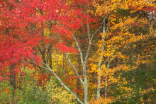 autumn, Quabbin Reservoir, Massachusetts, patrick zephyr, trees, red, forest