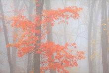 Autumn foliage, fog, quabbin reservoir, massachusetts