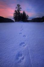 quabbin reservoir, massachusetts, sunrise, winter, snow, tracks, coyote