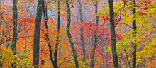 Forest, autumn, quabbin reservoir, crayola