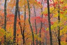 Quabbin reservoir, Massachusetts, autumn, forest, fog