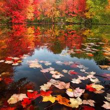 Fallen Leaves Puzzles