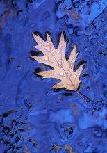 Leaf, blue,