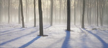 Fog, trees, Amherst, Massachusetts,  shadows