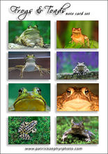 Frogs & Toads Set