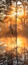 Sunrise, fog, Harvard pond, petersham, Massachusetts, orange, golden