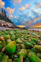 Schoodic peninsula, Acadia national park, Maine, moss, rocks, sunrise