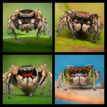 Paradise Spiders Coaster Set