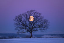 moon, tree, Hadley, Massachusetts, snow, winter, Patrick Zephyr, dawn