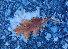 Winter, ice, frost, leaf
