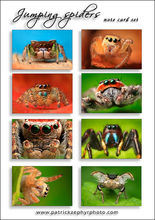 Jumping Spiders 1 Set