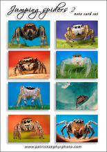 Jumping Spiders 2 Set