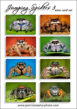 Jumping Spiders 3 Set