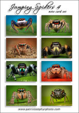Jumping Spiders 4 Set