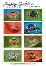 Jumping Spiders 5 Set