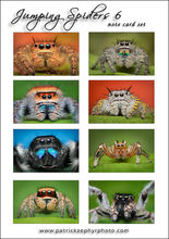 Jumping Spiders 6 Set