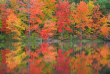 Pelham, knights pond, Massachusetts, reflection, autumn, pond