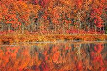 Autumn, reflection, pond, Massachusetts, quabbin reservoir,
