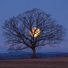 Lunar Eclipse Puzzles