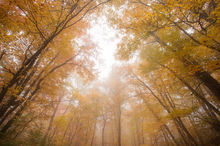 fog, autumn, forest, Massachusetts, Quabbin Reservoir, Pelham, autumn foliage,