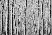 Winter, forest, snow, quabbin reservoir, Massachusetts,